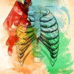 胸郭部のイラスト