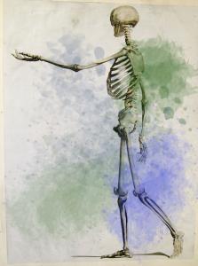 骸骨画像着色有り