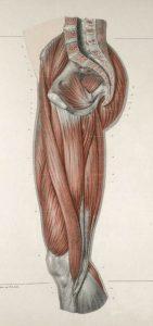 脚の内転筋部