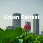lotus flower and buildings