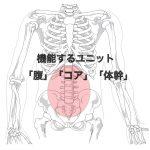 core abdomen