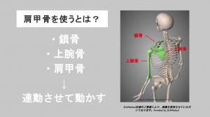 scapula movement